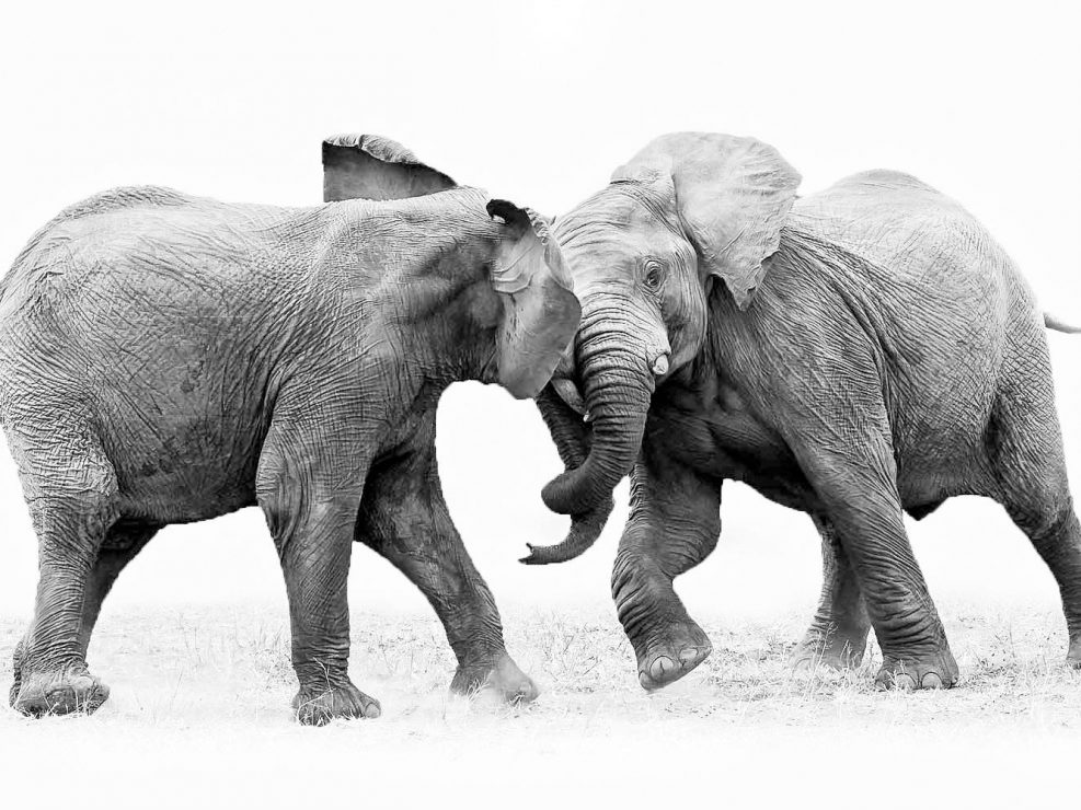 Elephant Teens