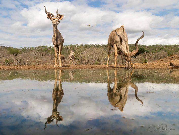 Kudu & Dragonfly
