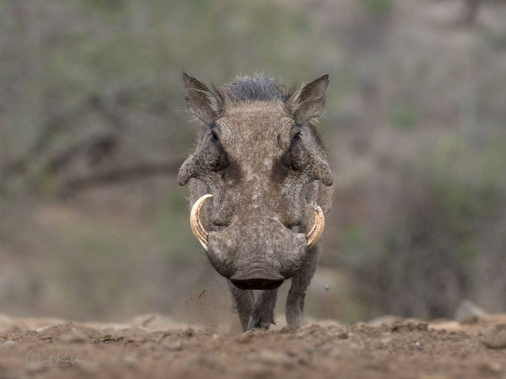 Focused hog
