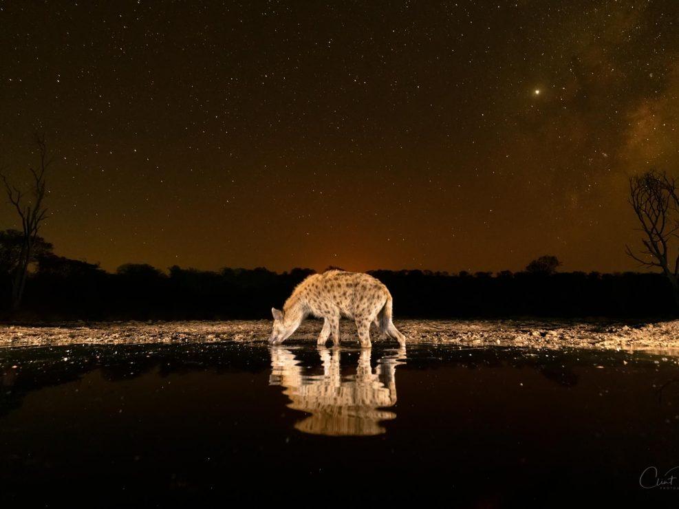 Fire Hyena