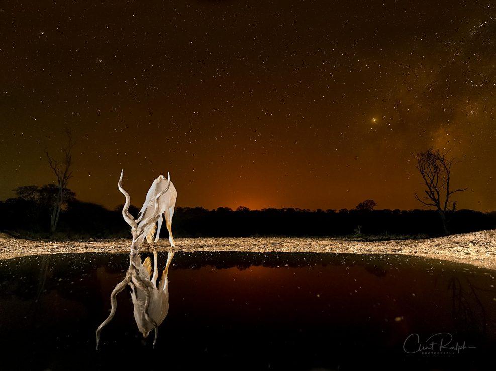 Kudu under the Stars