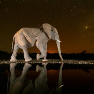 Elephant walks the Milky Way