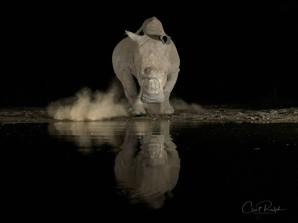 Rhino Alert